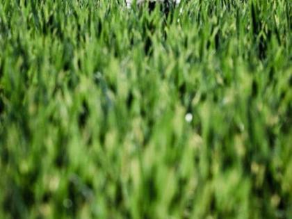 westie_field.jpg