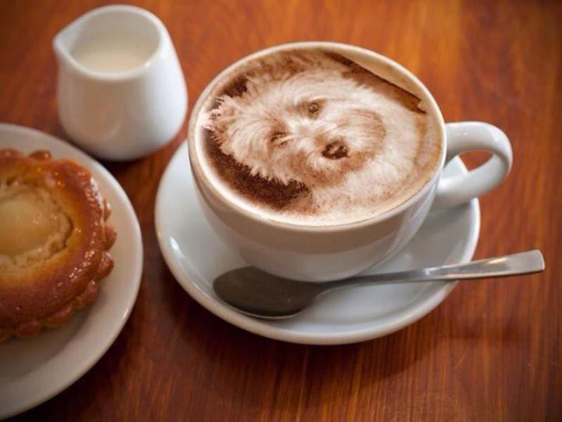 westie-coffe.jpg